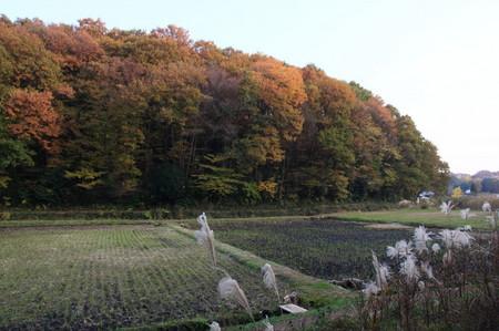 丸山_1.JPG