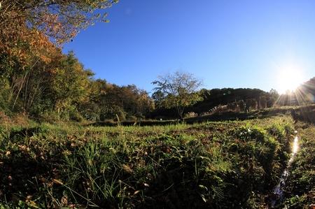 秋の里山1113.JPG